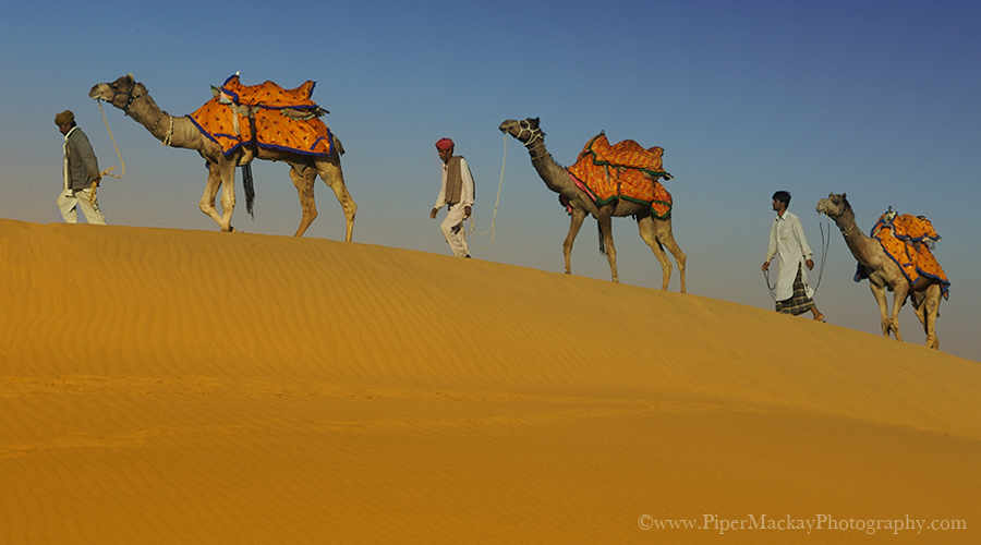 Men walking their camels along the ridge of the sand dunes in Jalsalmer, India
