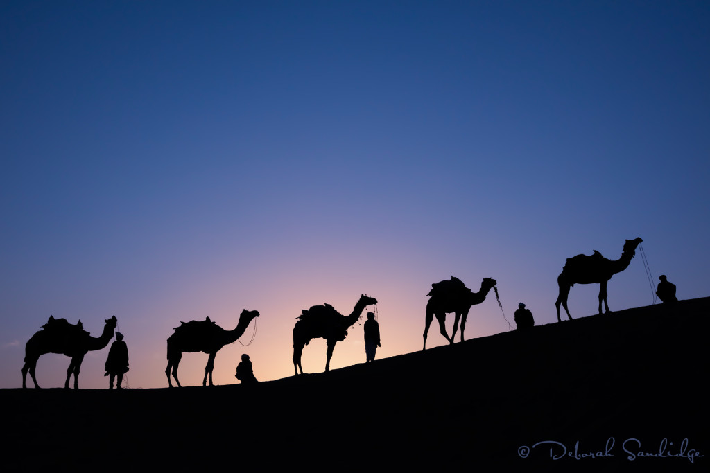 Camels on dunes at sunrise.